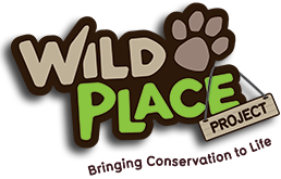 Wild Place Promo Code